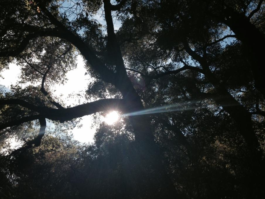 Oaks and sunlight in Slaughterhouse Canyon, Murrieta, CA