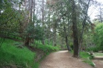 Ferndell picnic area, Griffith Park