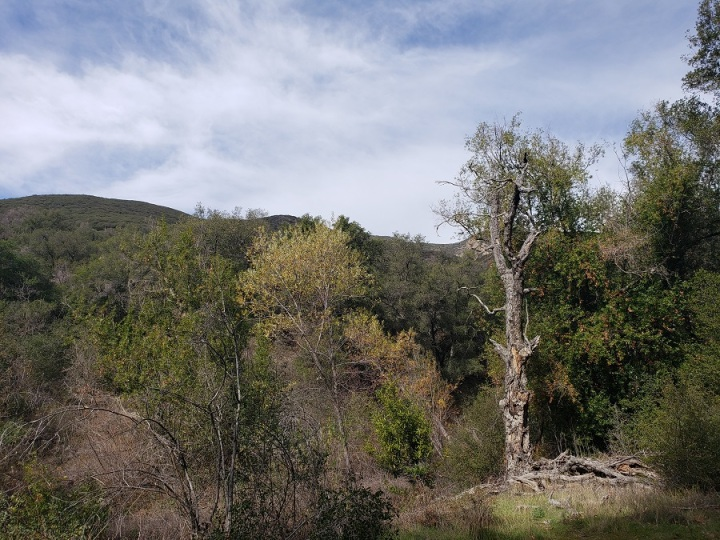Old Camp, Santiago Trail, Orange County, CA