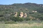 Sandstone outcrops, Irvine Open Space Preserve, Orange County, CA