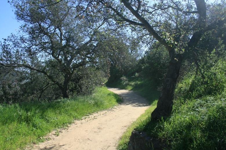 Greenery at Irvine Regional Park, Orange County, CA