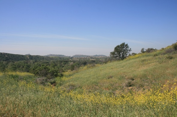 Spring wildflowers, Irvine Regional Park, Orange County, CA
