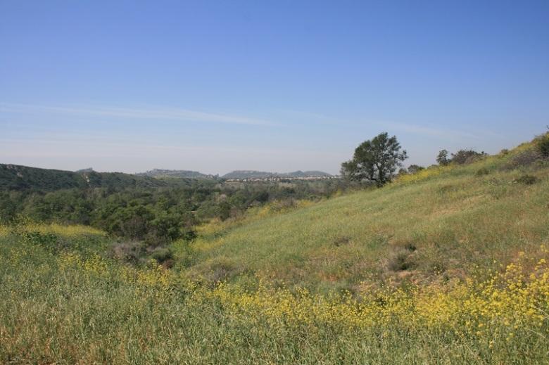 Spring wildflowers, Irvine Regional Park, Orange County, CA