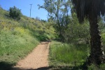 Palm trees, grass and wildflowers on the Rattlesnake Trail, Orange, CA