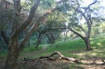Oaks in Devil Canyon, Chatsworth, CA