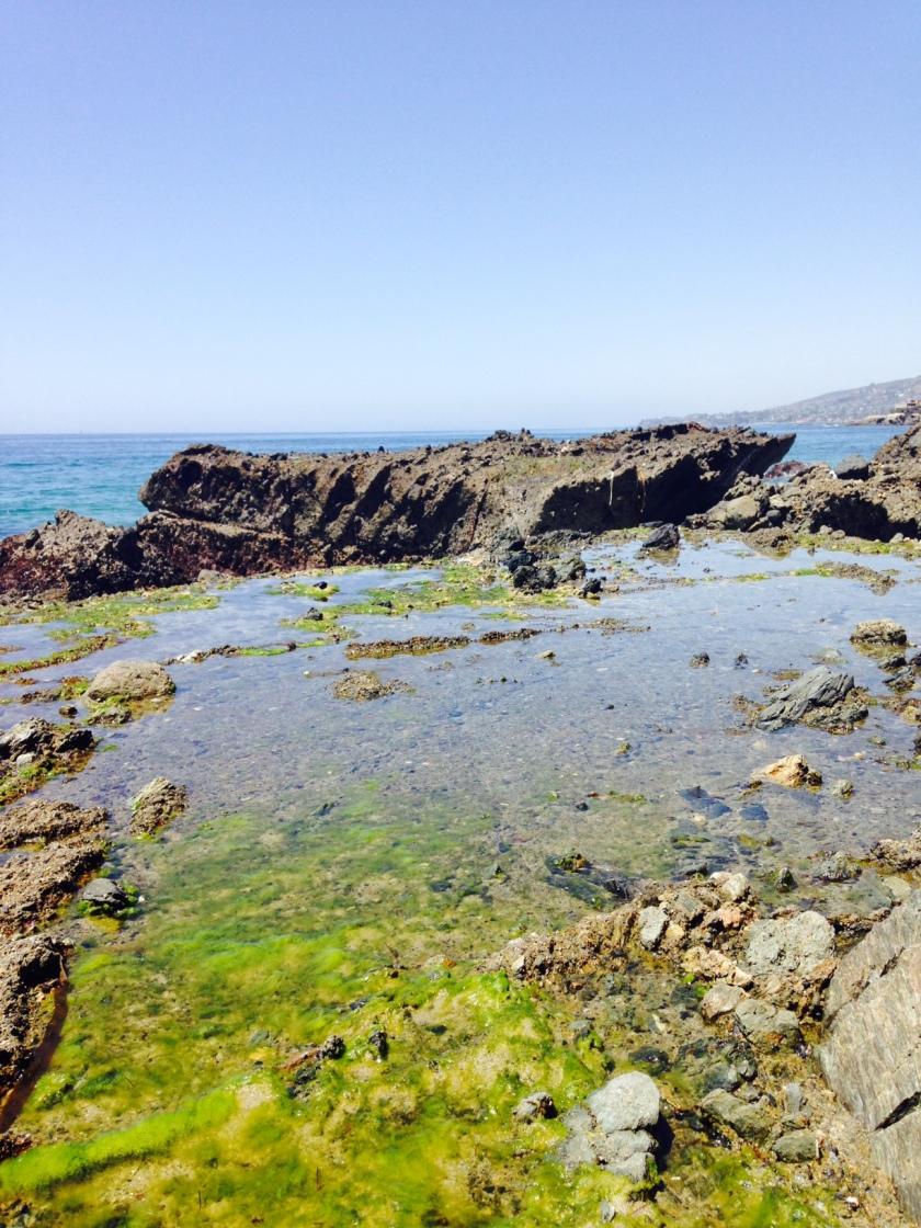 Tidepools at Victoria Beach, Orange County, CA