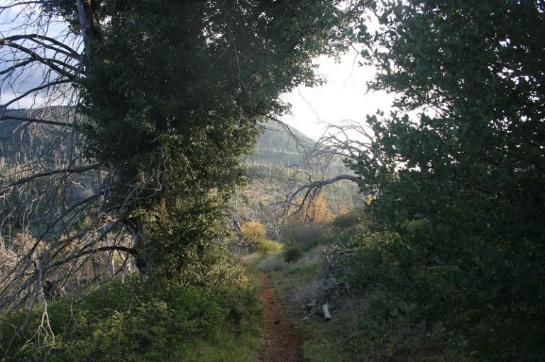 Black Oak Trail, Cuyamaca Rancho State Park, San Diego, CA
