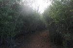 Sugar Pine Trail, Cuyamaca Rancho State Park, San Diego County, CA