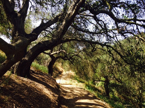 Oak Grove Loop Trail, Chino Hills, CA