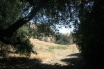 Oak grove, Doc Larsen Loop, Lakeview Terrace, CA