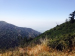 View from a bench on the Mt. Wilson Toll Road, Angeles National Forest, CA