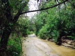 San Timoteo Creek