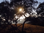 Sunset through trees on Catalina Island, Trans-Catalina Trail