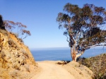 Ocean view from the Trans-Catalina Trail, Catalina Island