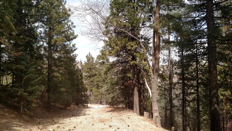 Pack Trail, San Bernardino National Forest