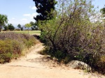 Boy Scout Trail, Kenneth Hahn State Recreation Area