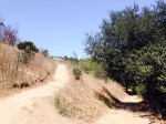 Trails in the Kenneth Hahn State Recreation Area, Ladera Heights, CA