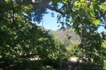 Sycamores in Lopez Canyon, San Diego, CA