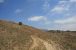Trail to McLean Overlook, Chino Hills State Park