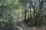Murrieta Creek, Los Padres National Forest, CA