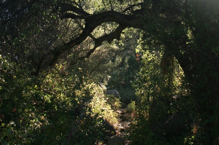 Murrieta Creek Trail, Ojai, CA