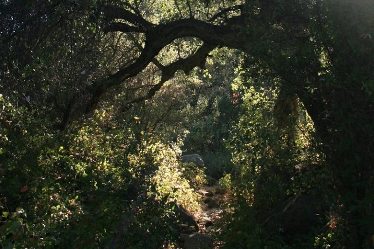Murrieta Creek Trail, Ojai, CA