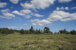 Alpine meadow on Mt. Pinos, Los Padres National Forest, CA