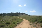 Mt. Pinos, Los Padres National Forest, CA