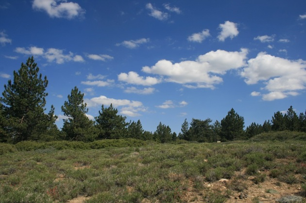 Meadow on Mt. Pinos, Ventura County, CA