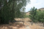 Upper Aliso Canyon, Chino Hills State Park