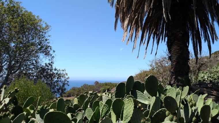 Prickly Pear Trail, Alta Vicente Reserve, CA