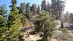 Ascending Kratka Ridge, Angeles National Forest, CA