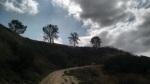 Trees on a ridge line above Central Park, Santa Clarita, CA