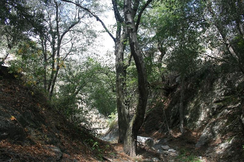 Cold Creek, George's Gap Trail