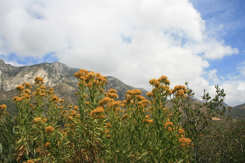 George's Gap Trail, Angeles National Forest, CA