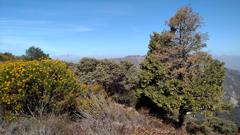 Kagel Mountain, Angeles National Forest, CA