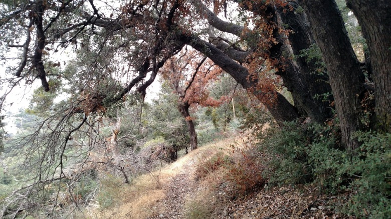 East Mt. Lowe Trail, Angeles National Forest, CA
