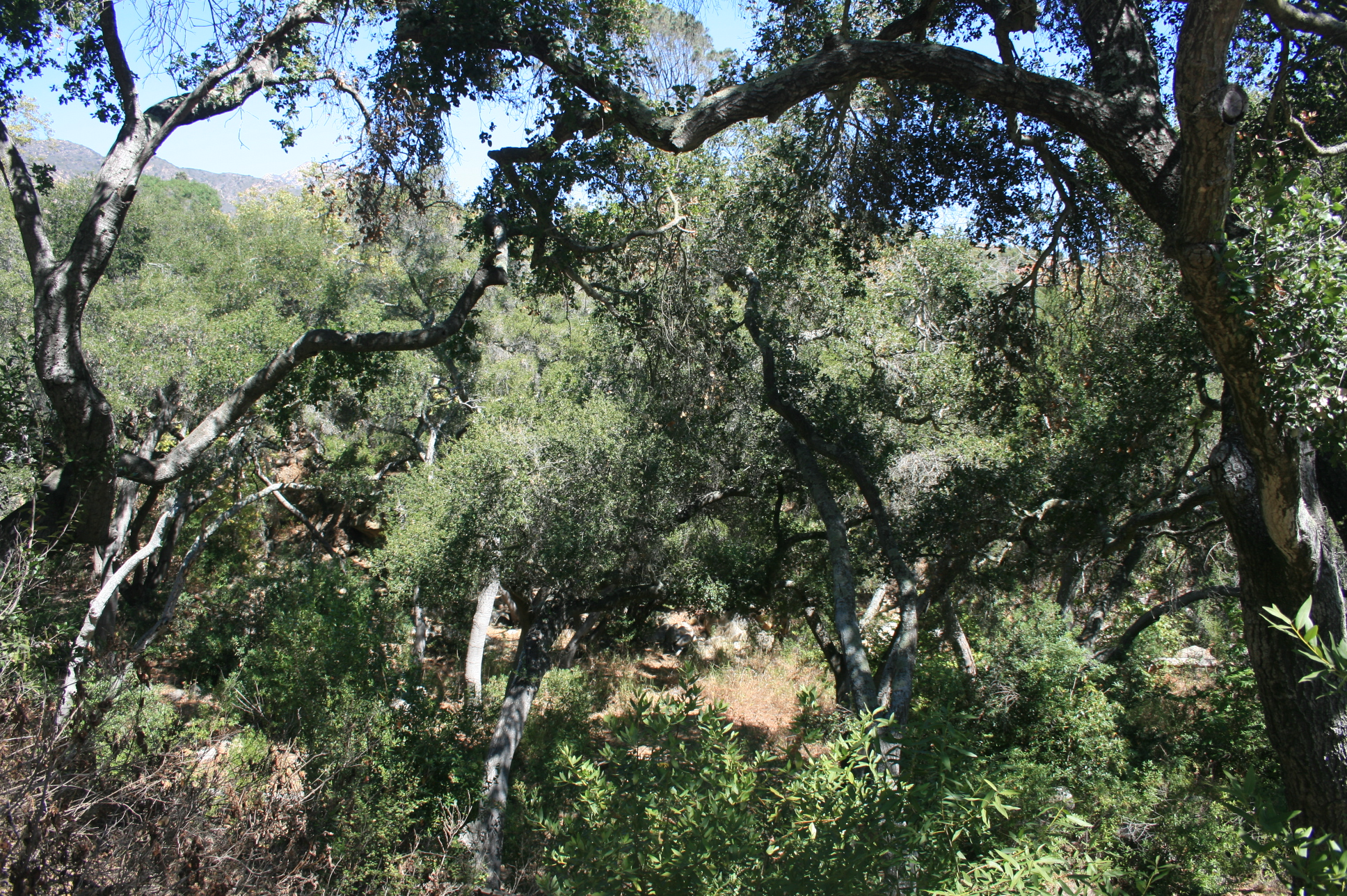 ... Santa Barbara Botanic Garden
