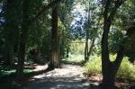 Redwood grove, Santa Barbara Botanic Garden