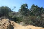 Climbing a ridge, Griffith Park, Los Angeles