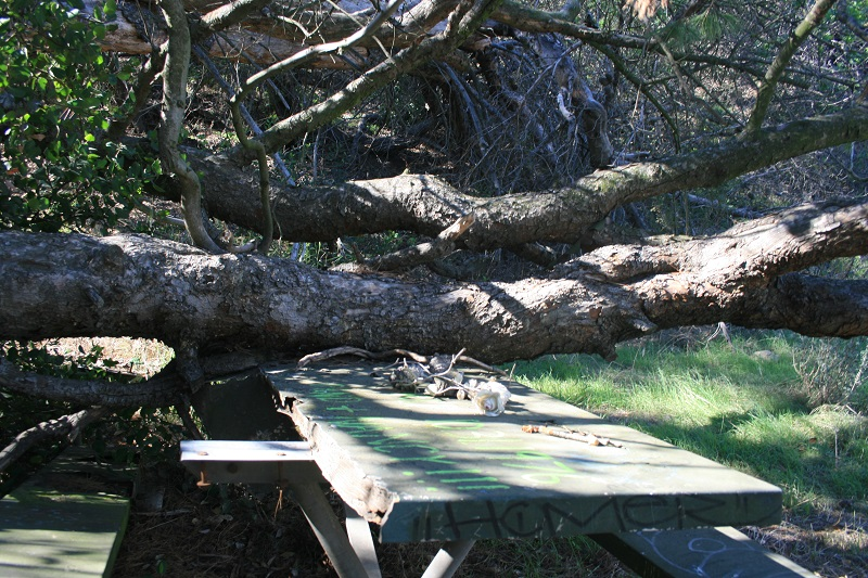 Haunted Table Griffith Park Nobody Hikes In LA - Picnic table los angeles