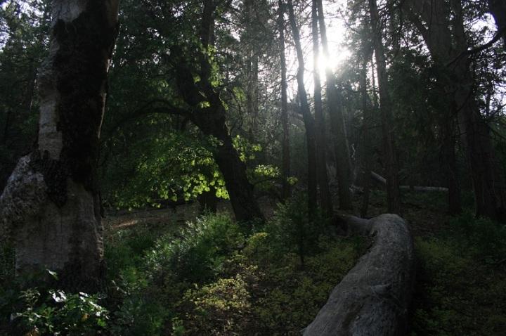 Agua Dulce Canyon, Laguna Mountains, San Diego County, CA