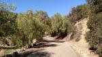 Road to Falcon Ridge Ranch, San Dimas, CA