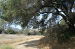 Service road at King Gillette Ranch, Santa Monica Mountains, CA