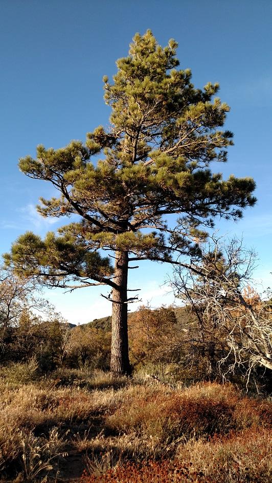 Kwaaymii Trail, Laguna Mountains, CA