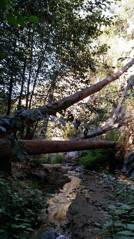 Millard Canyon, San Gabriel Mountains, CA