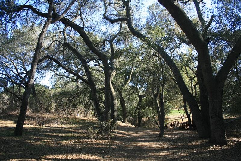 Woods at Dos Picos County Park, Ramona, CA