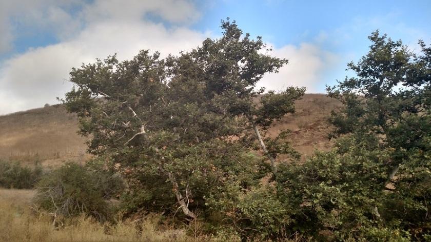Hangman's Tree, Orange County, CA