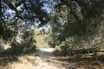 Oaks on Cheeseboro Canyon Road,