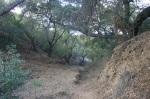 Oak shaded canyon, San Fernando Valley, CA